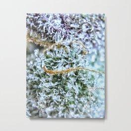 Platinum Purple Buds OG Kush x Purple Urkle Strains Metal Print