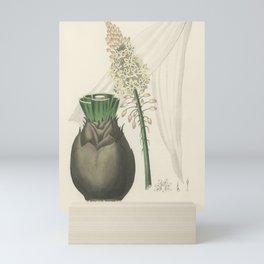 Vintage Botanical Print - 1836 - Squill (Scilla maritima) Mini Art Print