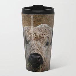 White High Park Cattle Chewing Grass Travel Mug