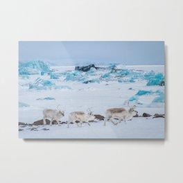 Reindeer in Svalbard Metal Print