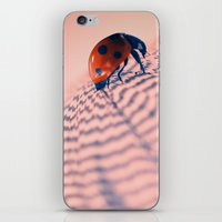 beetle iPhone & iPod Skins featuring beetle by Tanja Riedel