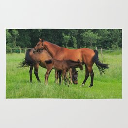 Horse Family In The Field In Holland Rug