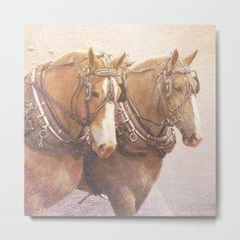 Draft Horses 2 Metal Print