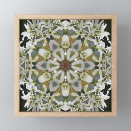 Lacy Serviceberry kaleidoscope - Amelanchier 0033 k5 Framed Mini Art Print