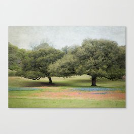 Hillcountry Bluebonnets Canvas Print