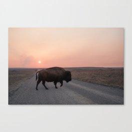 Sunset Buffalo  Canvas Print
