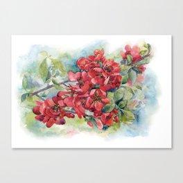Watercolor Apple quince bloom Canvas Print