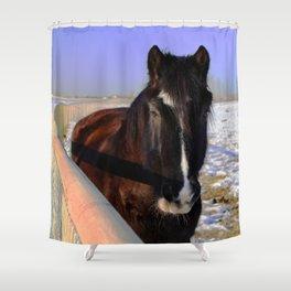 Mahogany Bay Draft Horse Shower Curtain
