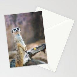 Photogenic Stationery Cards