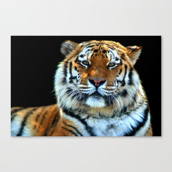 Sumatran Tiger - Panthera Tigris Sumatrae Canvas Print