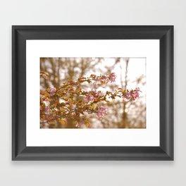 springtime  Framed Art Print