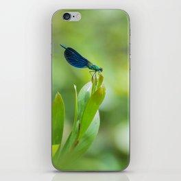 Metallic dragonfly iPhone Skin