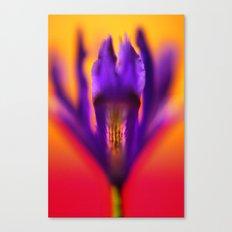 Purple Iris #1 Canvas Print