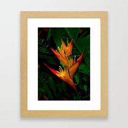Hawaiian Heliconia at First Light Framed Art Print
