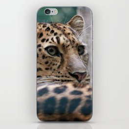 Spotted iPhone Skin