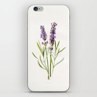lavender iPhone & iPod Skins featuring Lavender by 83 Oranges™