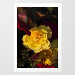 Yellow panache Art Print