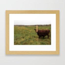 Walking the cow Framed Art Print