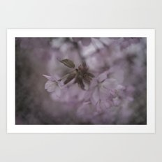 The first blossoms of spring Art Print