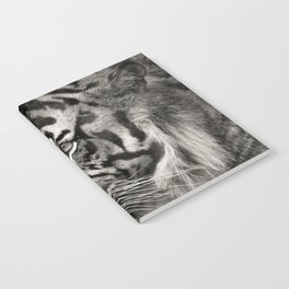The mysterious eye of the tiger. BN Notebook