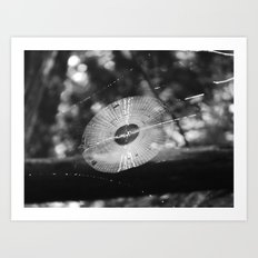 spider web 2016 IV Art Print