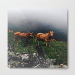 Cows of Galicia Metal Print
