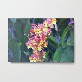 Longwood Gardens Orchid Extravaganza 62 Metal Print