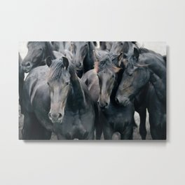 Your Wild Horses - Nature Photography Metal Print