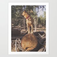 simba Art Prints featuring Simba by Donovan Bennett Designs