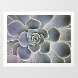 Succulent Leaf Close Up Photography | Plant | Cactus | Botanical Art Print