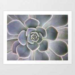 Succulent | Plant Photography | Cactus | Botanical | Floral | Minimalism Art Print