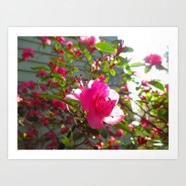 The Frail Flower Art Print