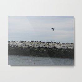 Cormorants in Provincetown Harbor Metal Print