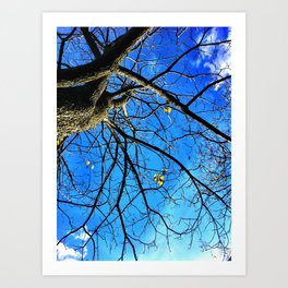 Catalpa Art Print
