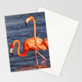 Two Pink Flamingos in Mexico Stationery Cards