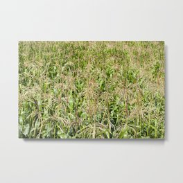 brushes of young corn Metal Print