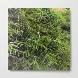 Bamboo Photography Metal Print