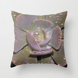 Echeveria Elegans Throw Pillow