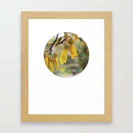 Sophora Framed Art Print