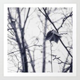 Last Leaf of Autumn (Photograph) Art Print