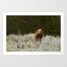 Bush Bear Art Print