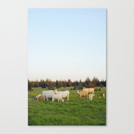 Cows In The Country I Canvas Print