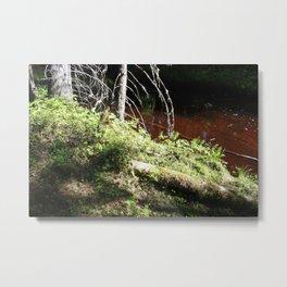 Language Of Trees Metal Print