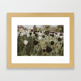 Tulips in Germany Framed Art Print