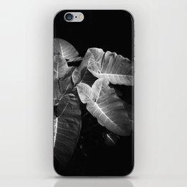 Elephant Ears in the Dark iPhone Skin
