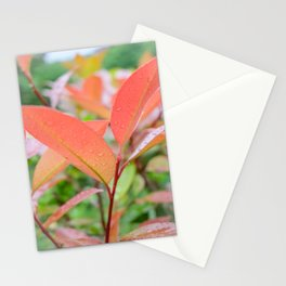 Fifth Month Photinia Stationery Cards