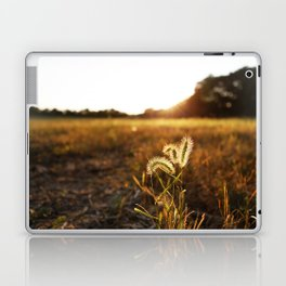 Golden Sunset Laptop & iPad Skin