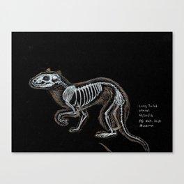 Weasel Skeleton Canvas Print