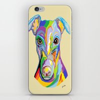 greyhound iPhone & iPod Skins featuring Greyhound by EloiseArt