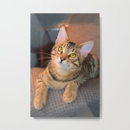 Cute Bengal Kitty Metal Print